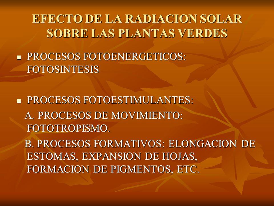 EFECTO DE LA RADIACION SOLAR SOBRE LAS PLANTAS VERDES