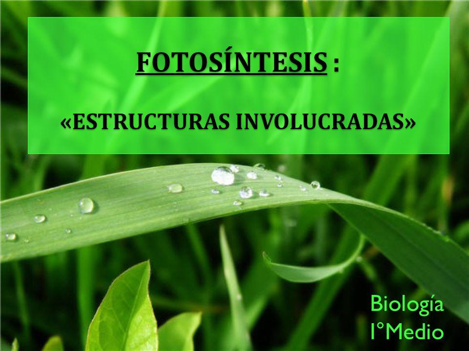 FOTOSÍNTESIS : «estructuras involucradas»