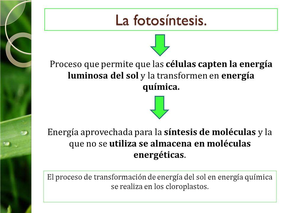 La fotosíntesis. Proceso que permite que las células capten la energía luminosa del sol y la transformen en energía química.