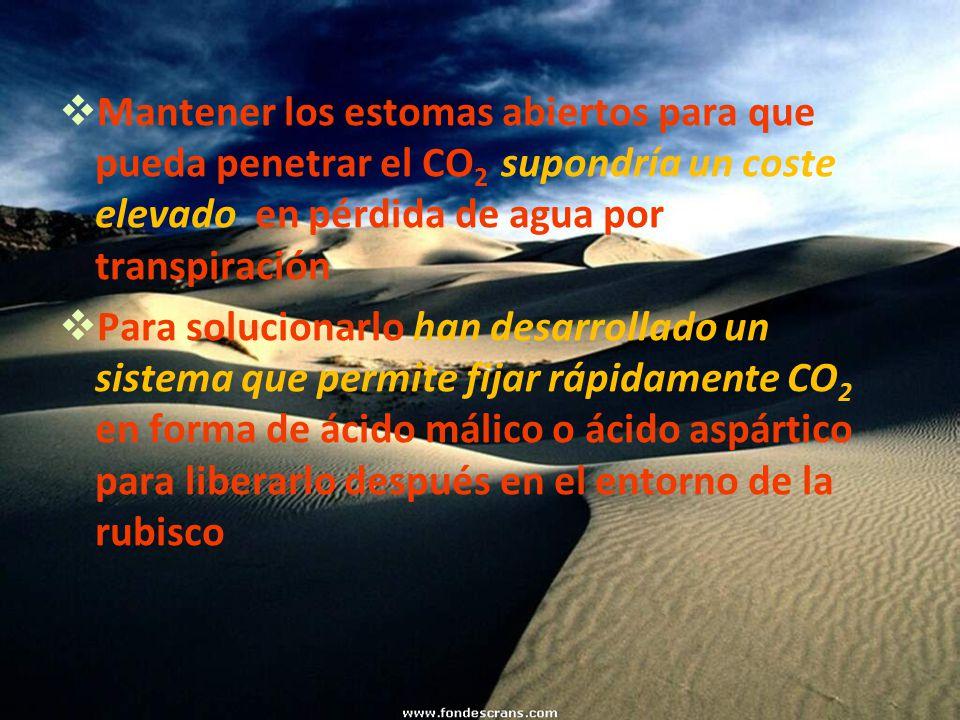 Mantener los estomas abiertos para que pueda penetrar el CO2 supondría un coste elevado en pérdida de agua por transpiración