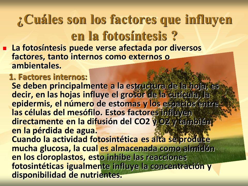 ¿Cuáles son los factores que influyen en la fotosíntesis
