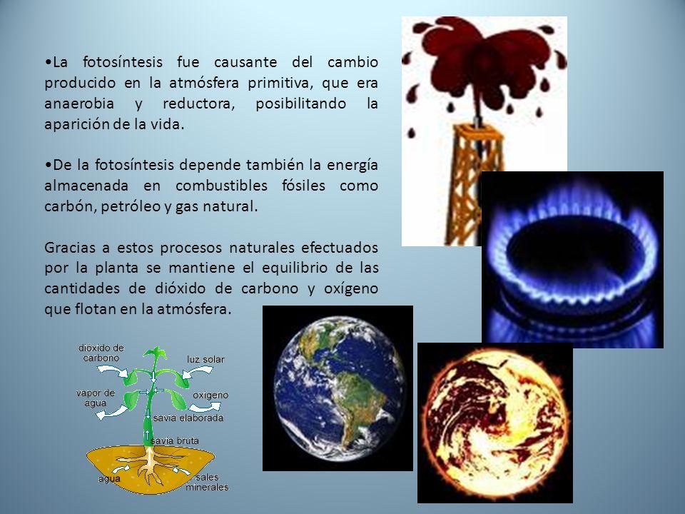 •La fotosíntesis fue causante del cambio producido en la atmósfera primitiva, que era anaerobia y reductora, posibilitando la aparición de la vida.