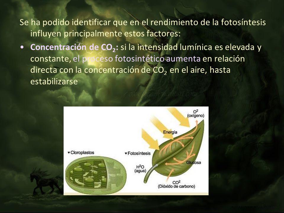 Se ha podido identificar que en el rendimiento de la fotosíntesis influyen principalmente estos factores:
