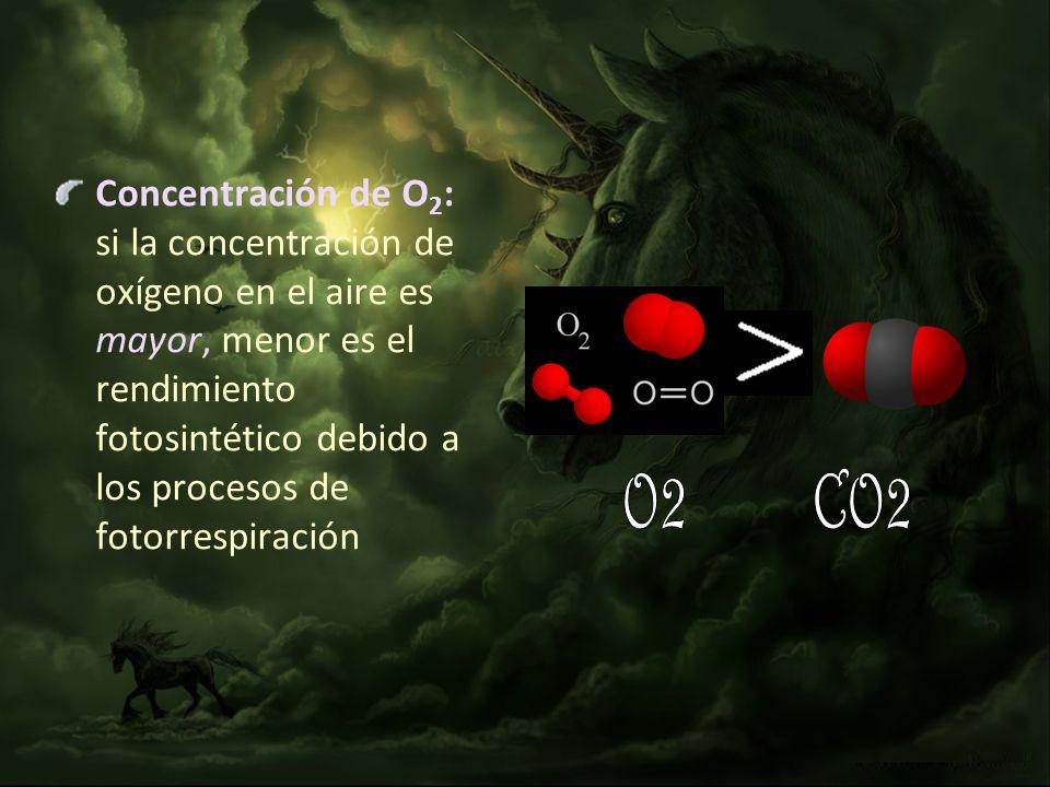Concentración de O2: si la concentración de oxígeno en el aire es mayor, menor es el rendimiento fotosintético debido a los procesos de fotorrespiración