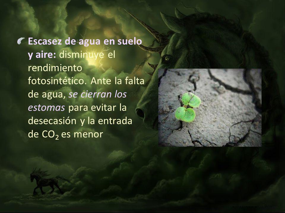 Escasez de agua en suelo y aire: disminuye el rendimiento fotosintético.