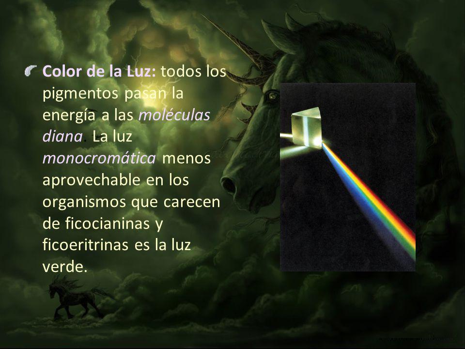 Color de la Luz: todos los pigmentos pasan la energía a las moléculas diana.