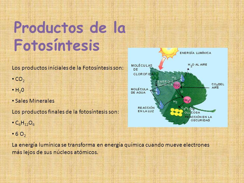 Productos de la Fotosíntesis