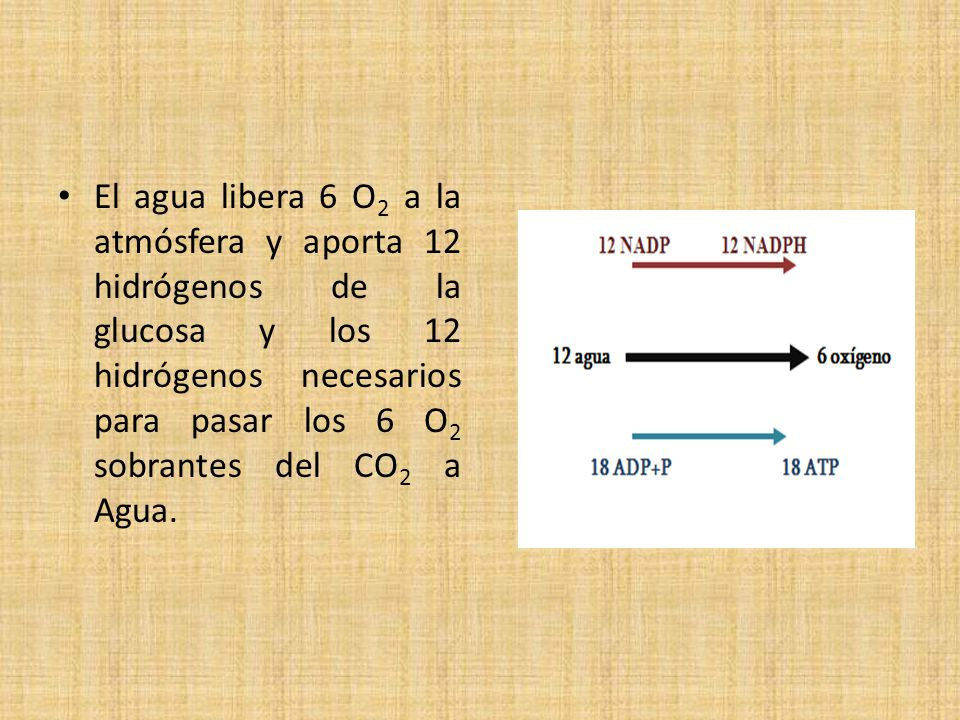 El agua libera 6 O2 a la atmósfera y aporta 12 hidrógenos de la glucosa y los 12 hidrógenos necesarios para pasar los 6 O2 sobrantes del CO2 a Agua.