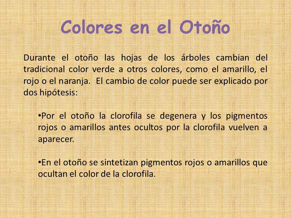 Colores en el Otoño