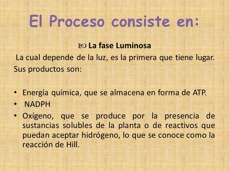 El Proceso consiste en: