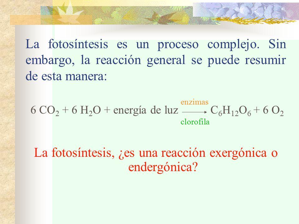 La fotosíntesis, ¿es una reacción exergónica o endergónica
