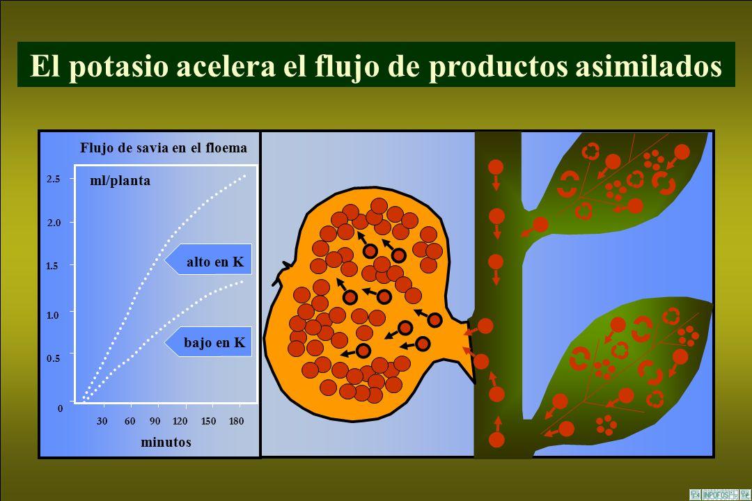 Papel del potasio en las plantas ppt video online descargar for Potasio para plantas