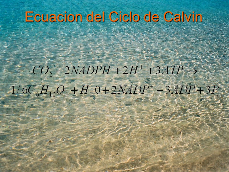 Ecuacion del Ciclo de Calvin