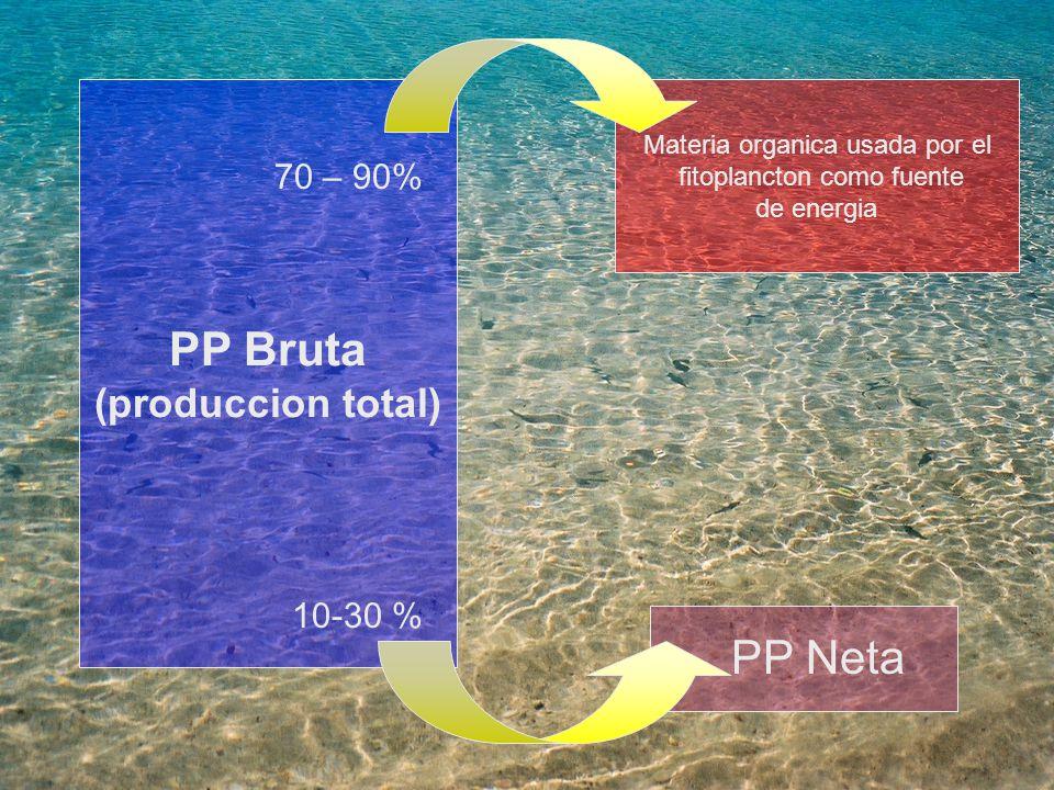 PP Bruta PP Neta (produccion total) 70 – 90% 10-30 %