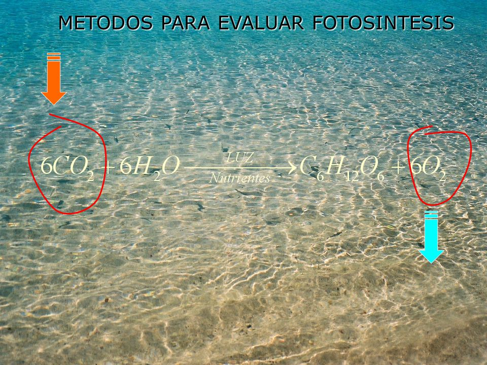 METODOS PARA EVALUAR FOTOSINTESIS