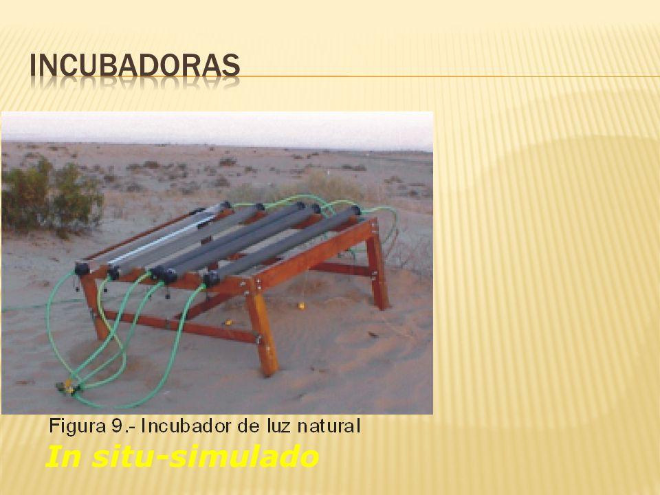 Incubadoras In situ-simulado