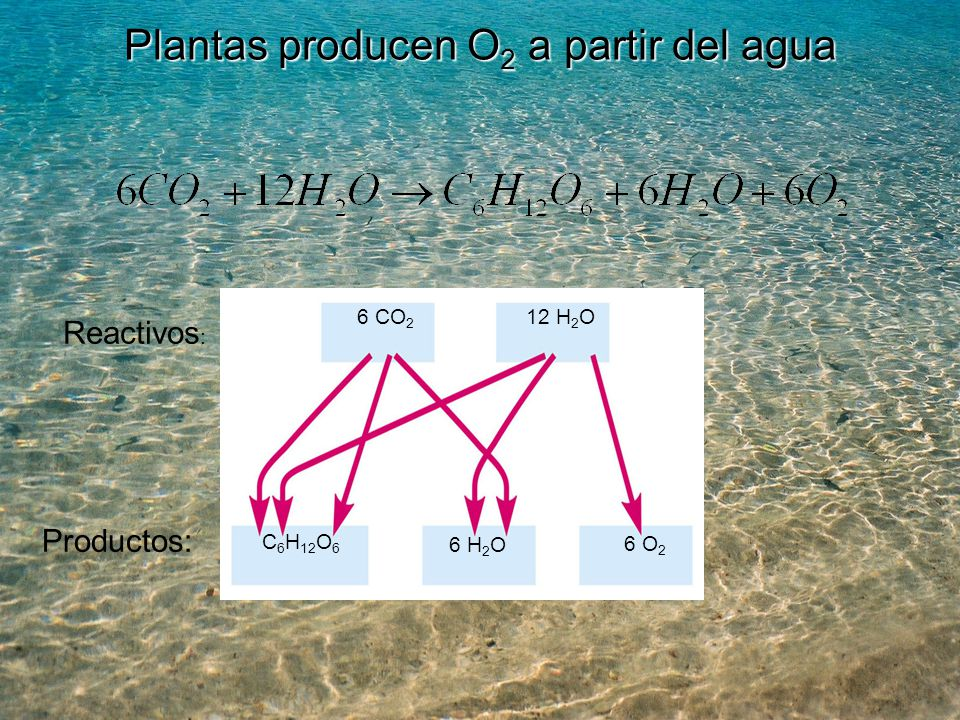 Plantas producen O2 a partir del agua