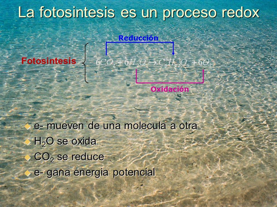 La fotosintesis es un proceso redox