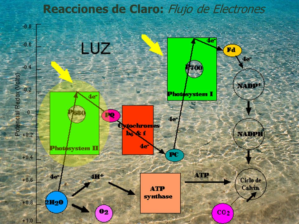 Reacciones de Claro: Flujo de Electrones
