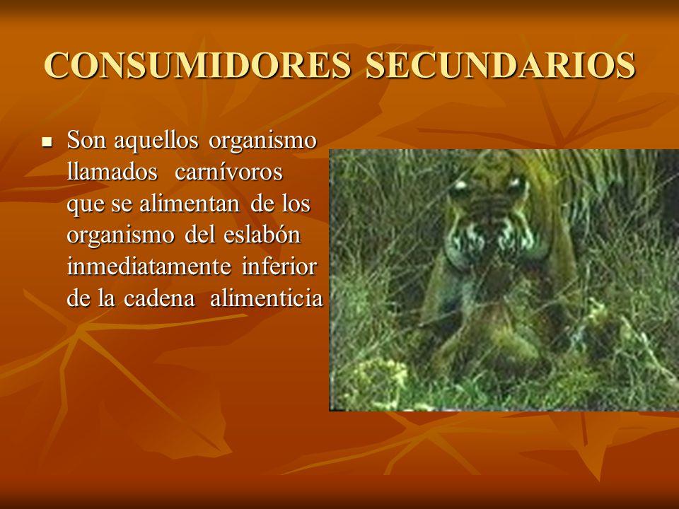 CONSUMIDORES SECUNDARIOS