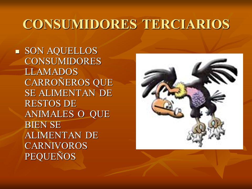 CONSUMIDORES TERCIARIOS