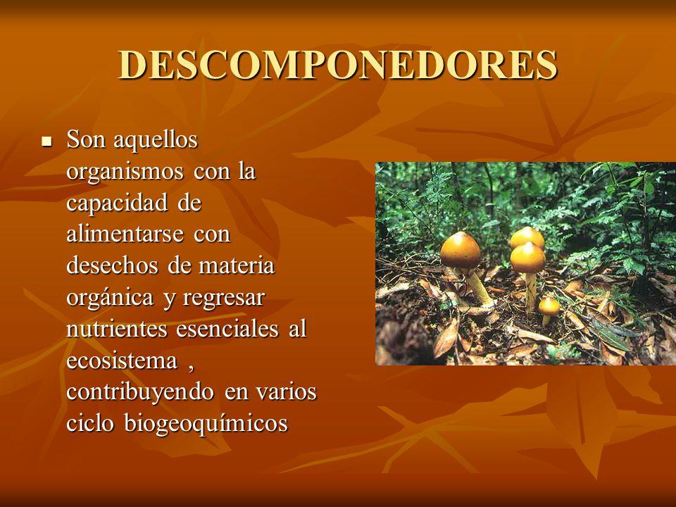 DESCOMPONEDORES