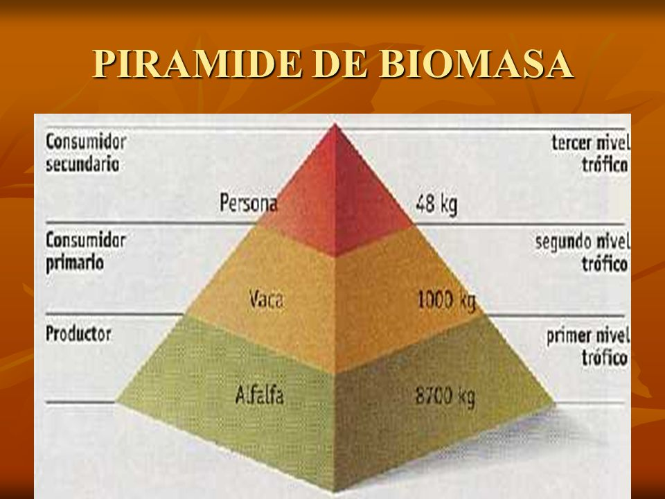 PIRAMIDE DE BIOMASA
