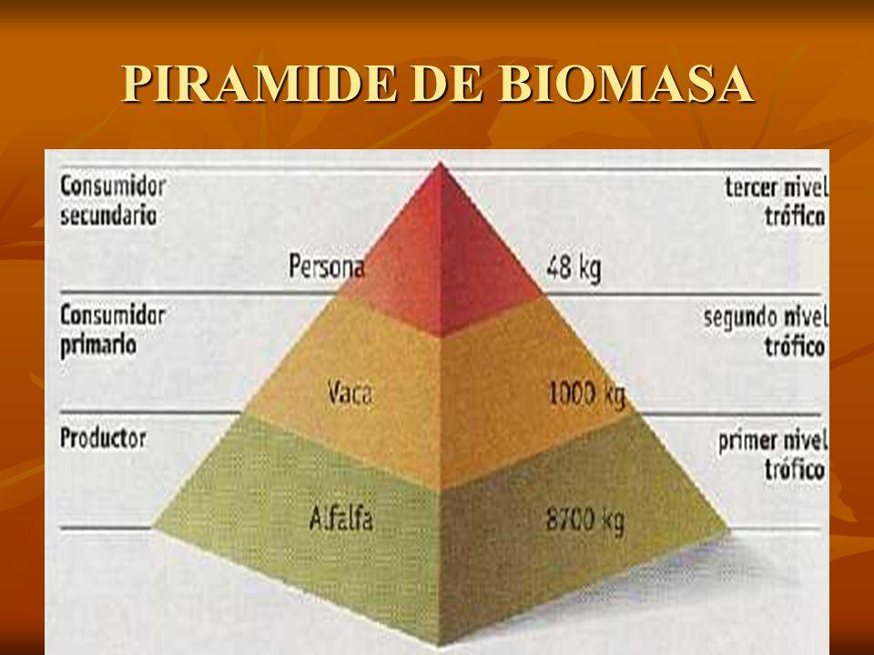 PIRAMIDE DE BIOMASA