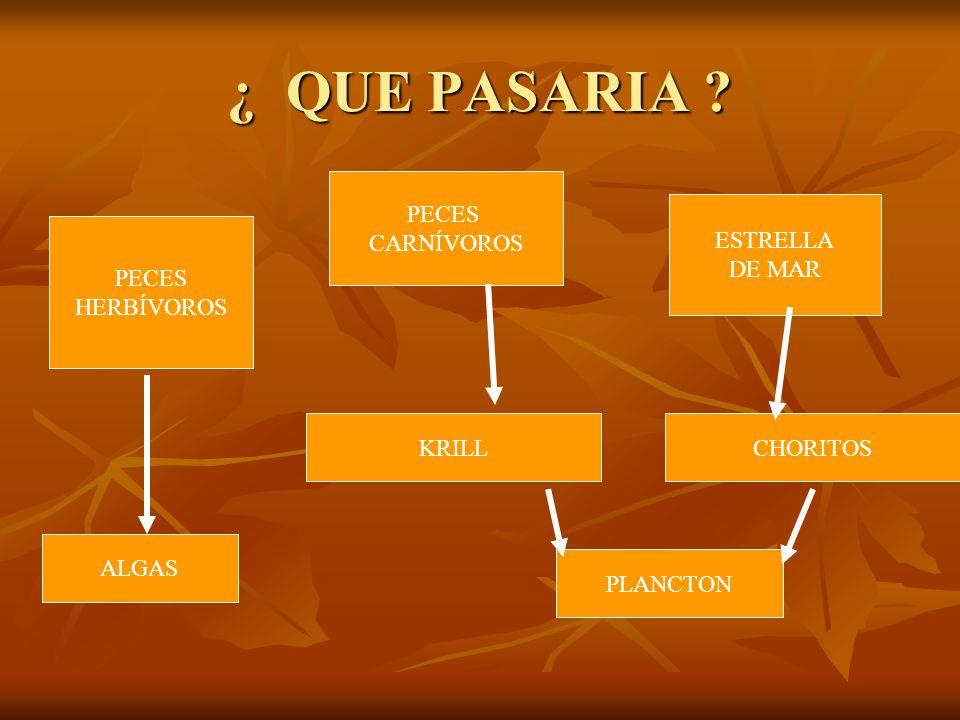 ¿ QUE PASARIA PECES CARNÍVOROS ESTRELLA DE MAR PECES HERBÍVOROS