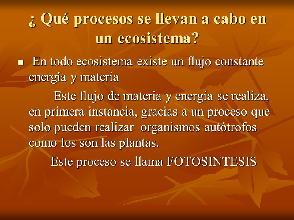 ¿ Qué procesos se llevan a cabo en un ecosistema