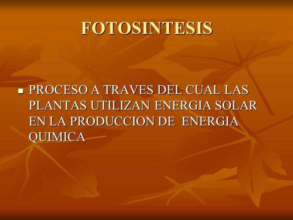 FOTOSINTESIS PROCESO A TRAVES DEL CUAL LAS PLANTAS UTILIZAN ENERGIA SOLAR EN LA PRODUCCION DE ENERGIA QUIMICA.