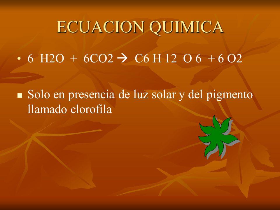 ECUACION QUIMICA 6 H2O + 6CO2  C6 H 12 O 6 + 6 O2