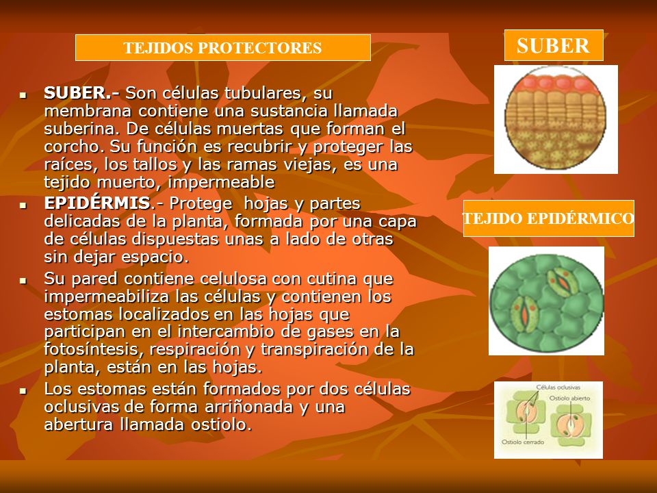 SUBER TEJIDOS PROTECTORES