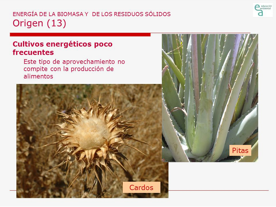 ENERGÍA DE LA BIOMASA Y DE LOS RESIDUOS SÓLIDOS Origen (13)