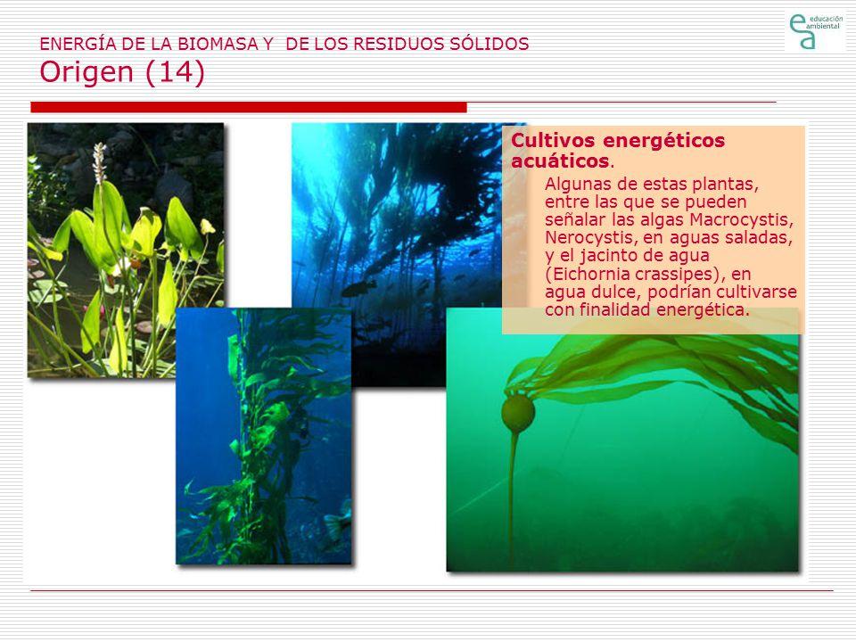 ENERGÍA DE LA BIOMASA Y DE LOS RESIDUOS SÓLIDOS Origen (14)