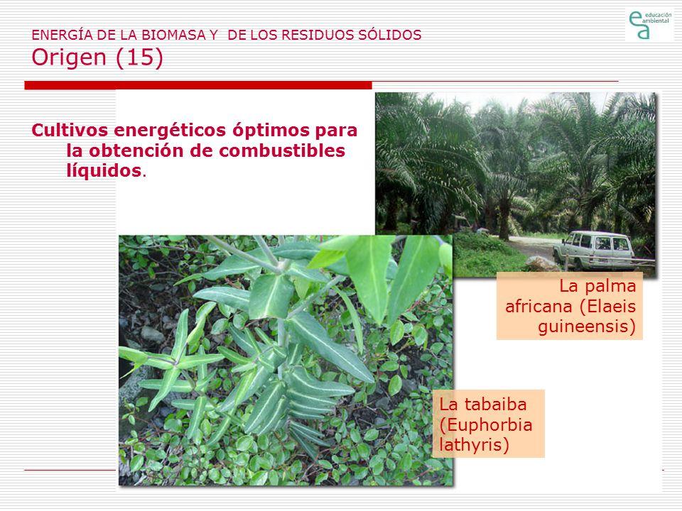 ENERGÍA DE LA BIOMASA Y DE LOS RESIDUOS SÓLIDOS Origen (15)