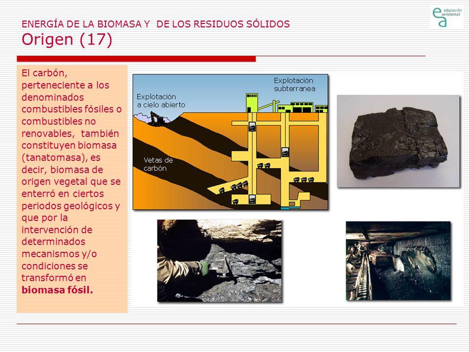 ENERGÍA DE LA BIOMASA Y DE LOS RESIDUOS SÓLIDOS Origen (17)