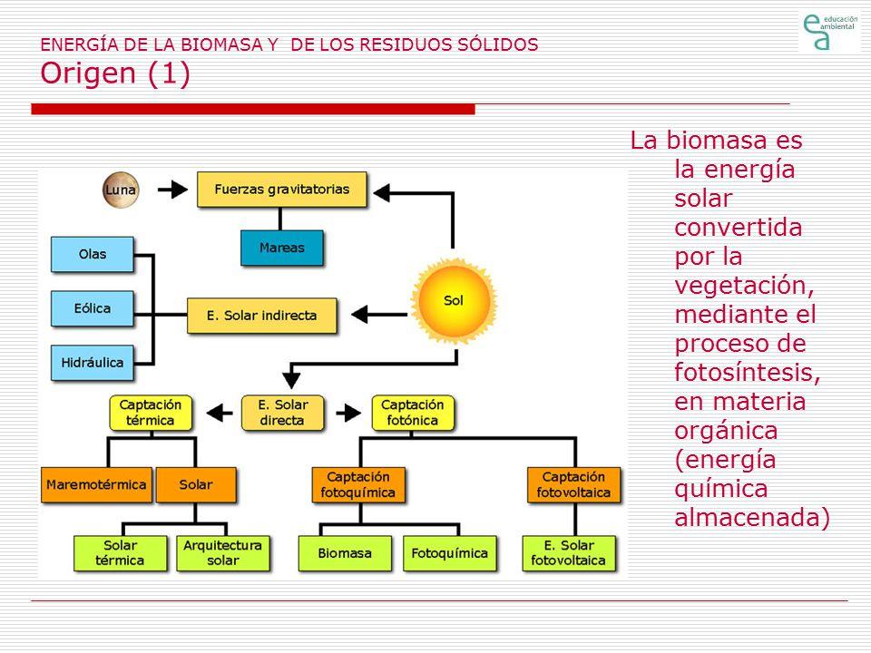 ENERGÍA DE LA BIOMASA Y DE LOS RESIDUOS SÓLIDOS Origen (1)