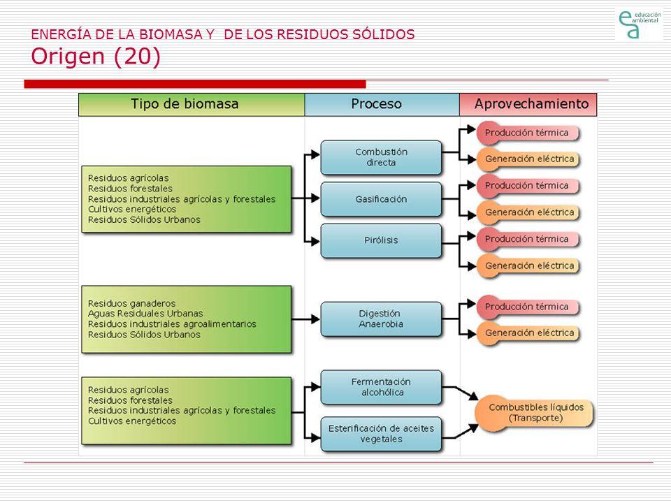 ENERGÍA DE LA BIOMASA Y DE LOS RESIDUOS SÓLIDOS Origen (20)