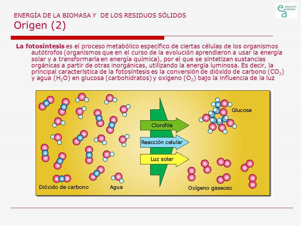 ENERGÍA DE LA BIOMASA Y DE LOS RESIDUOS SÓLIDOS Origen (2)