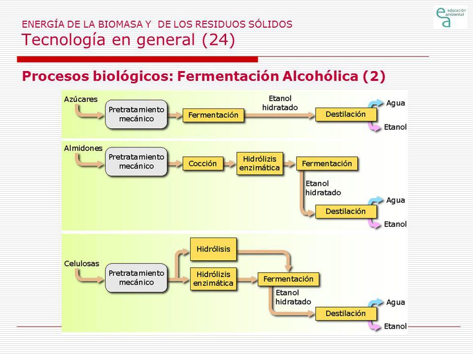 Procesos biológicos: Fermentación Alcohólica (2)
