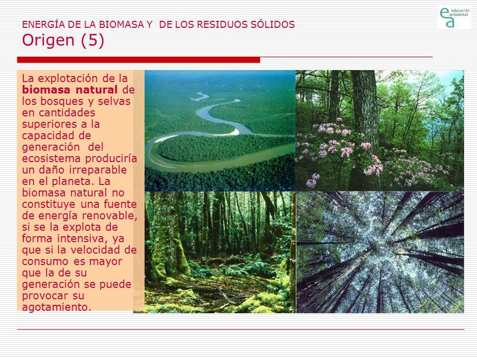 ENERGÍA DE LA BIOMASA Y DE LOS RESIDUOS SÓLIDOS Origen (5)