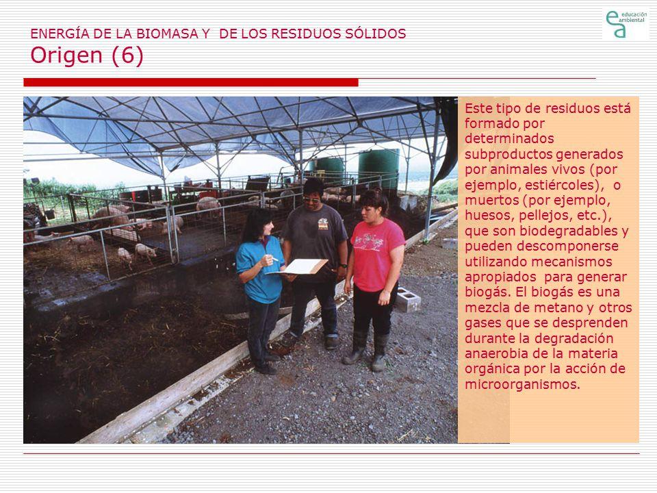 ENERGÍA DE LA BIOMASA Y DE LOS RESIDUOS SÓLIDOS Origen (6)