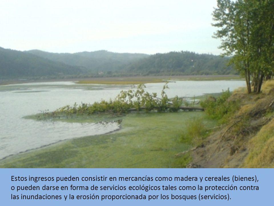 Estos ingresos pueden consistir en mercancías como madera y cereales (bienes), o pueden darse en forma de servicios ecológicos tales como la protección contra las inundaciones y la erosión proporcionada por los bosques (servicios).