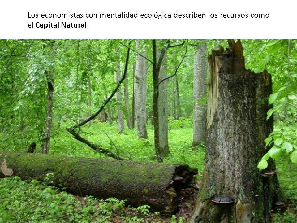 Los economistas con mentalidad ecológica describen los recursos como el Capital Natural.
