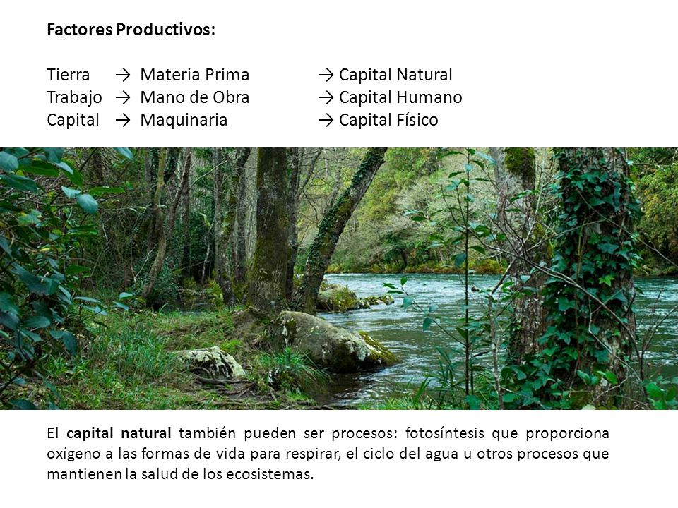 Factores Productivos: Tierra → Materia Prima → Capital Natural