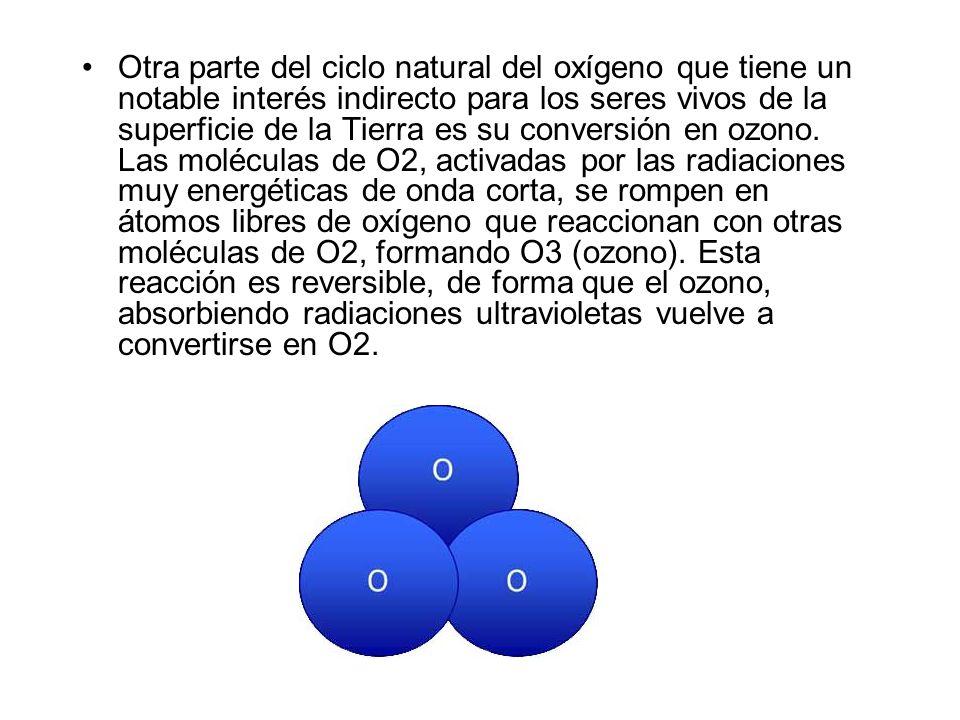 Otra parte del ciclo natural del oxígeno que tiene un notable interés indirecto para los seres vivos de la superficie de la Tierra es su conversión en ozono.