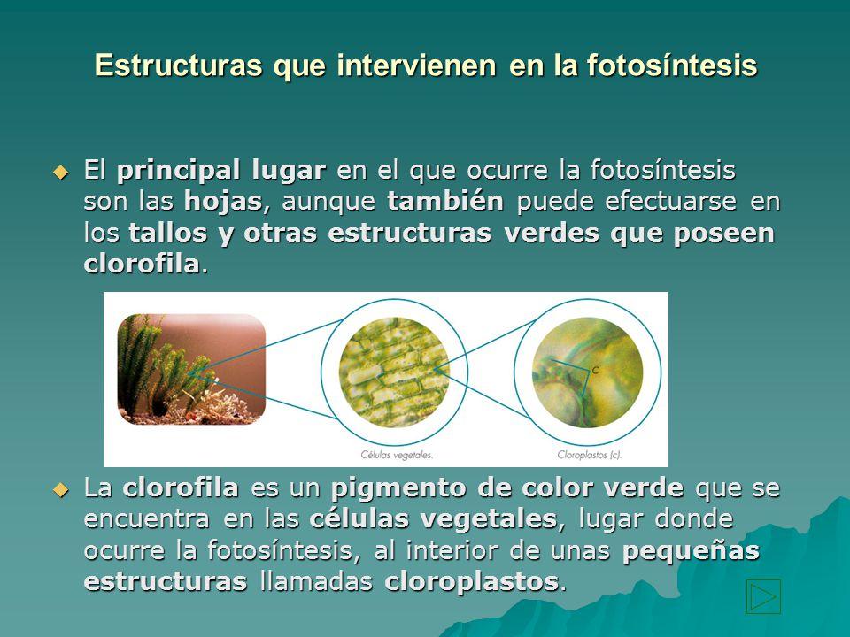 Estructuras que intervienen en la fotosíntesis