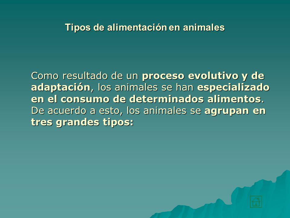 Tipos de alimentación en animales
