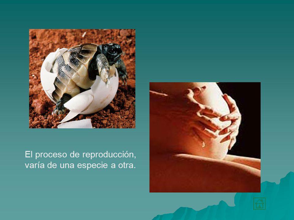 El proceso de reproducción, varía de una especie a otra.